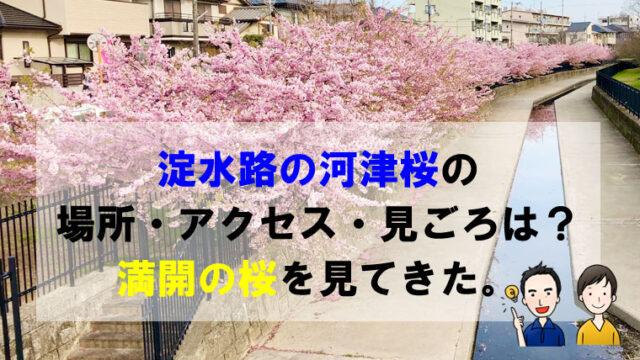 淀水路の河津桜の場所・アクセス・見ごろは?満開の桜を見てきた。